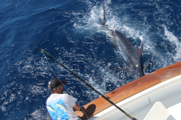 Crew expert in big game fishing in La Gomera - Canary Islands