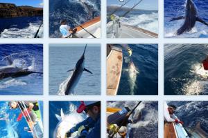 Galerie de photos de la pêche au gros à La Gomera - Iles Canaries