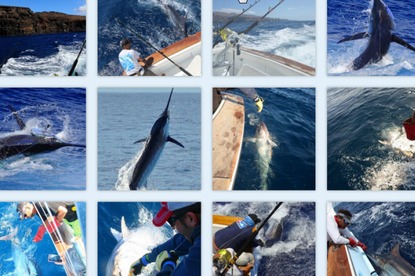 Photo Gallery – Big Game Fishing in La Gomera (Canary Islands)