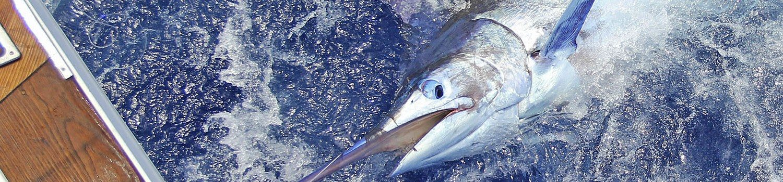 Big game fishing boat charter La Gomera