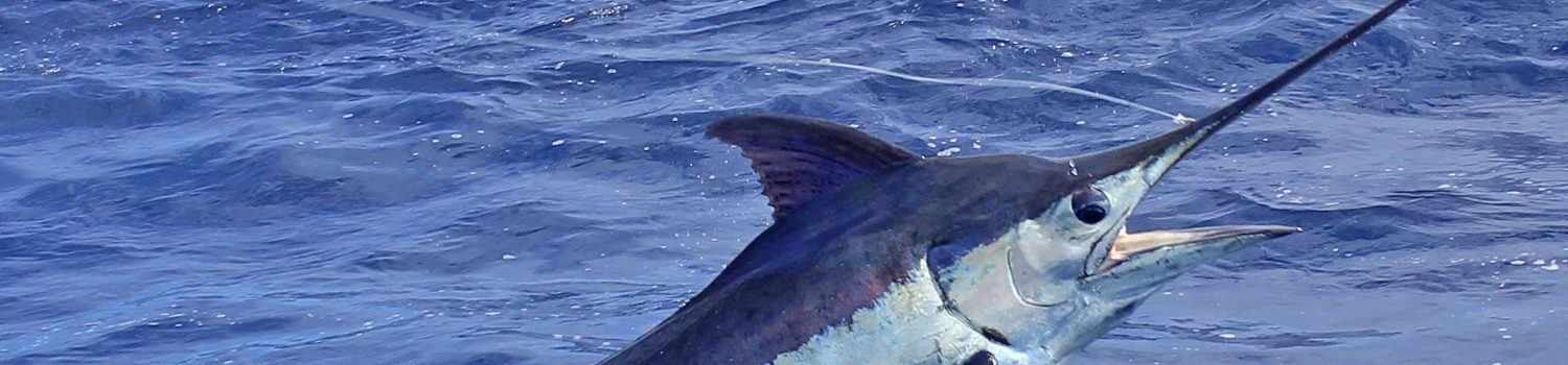 Big game fishing boat charter La Gomera