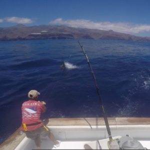 Blue marlin fishing La Gomera