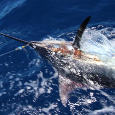 Big game fishing La Gomera