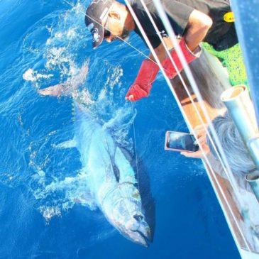 Tuna season 2017 in la Gomera, march and april