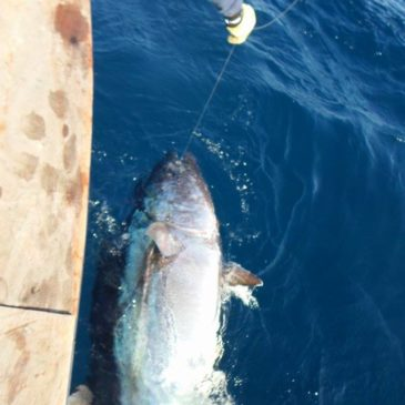 Gros thon rouge à la Gomera