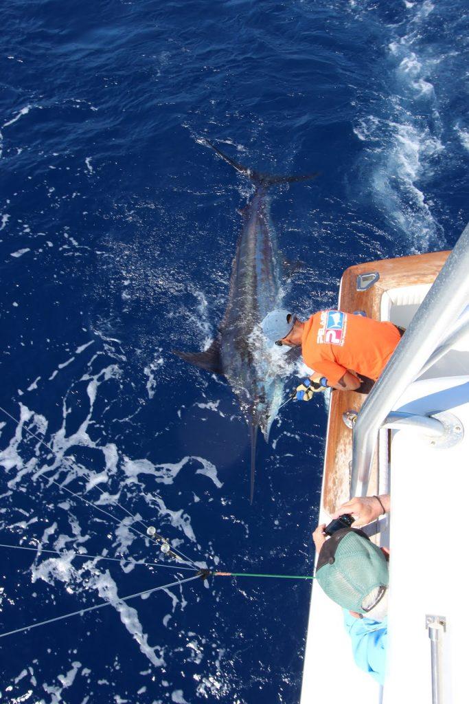 big-game-fishing-la-gomera-2016-june-15