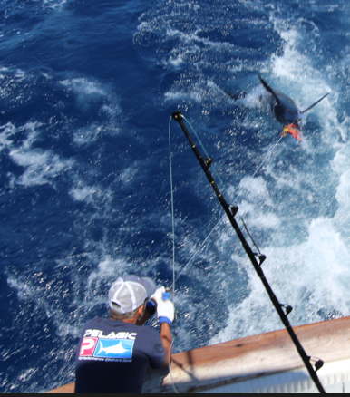 Big game fishing in La Gomera