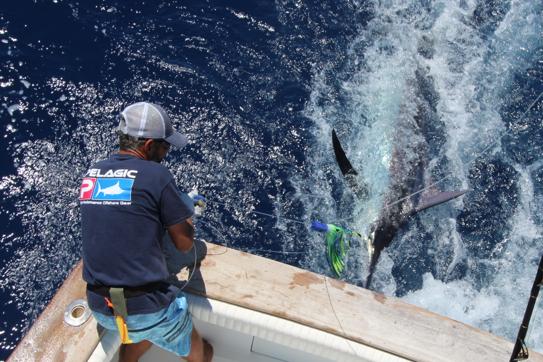 Pêche au gros à La Gomera