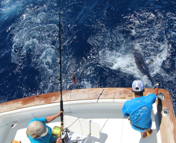 la-gomera-big-game-fishing-tournament-june-2016-3