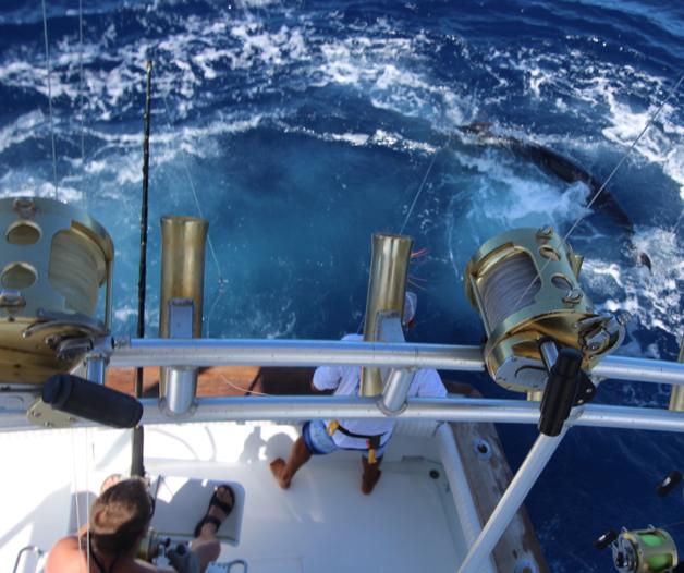 Pêche au gros la Gomera Juillet 2016