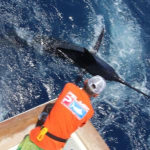 Pêche au marlin bleu La Gomera Juin 2016